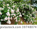 สวนดอกไม้ฤดูใบไม้ผลิ 39748074