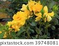 สวนดอกไม้ฤดูใบไม้ผลิ 39748081