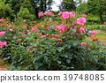 สวนดอกไม้ฤดูใบไม้ผลิ 39748085