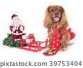 dog and christmas 39753404