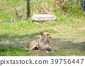 어드벤처 월드, 동물, 포유류 39756447