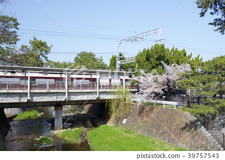 효고현 니시 노미야시 夙川의 벚꽃 39757543