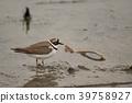 野生鳥類 野鳥 秋天 39758927