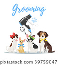 Grooming concept with dogs 39759047
