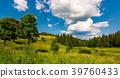 meadow, forest, hillside 39760433