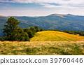 tree on the grassy hillside 39760446