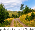 truck road through forested hills of Carpathians 39760447