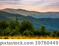 forested hills of Carpathian mountains in summer 39760449