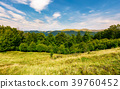 forested hill on the meadow in summer 39760452