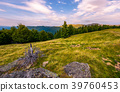 forest on the hillside in evening 39760453