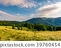 meadow near the forest at the foot of the mountain 39760454