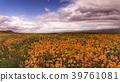 A Field of Wildflowers 39761081