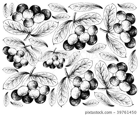 Hand Drawn Background of Fresh Acai Berries 39761450