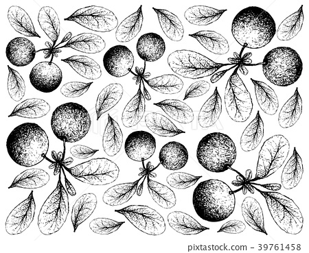 Hand Drawn Background of Fresh Bog Bilberries 39761458