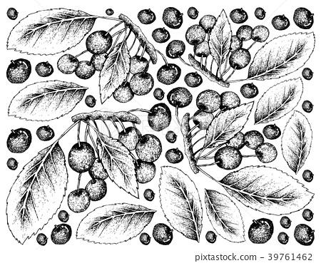 Hand Drawn Background of Fresh Red Cherries 39761462