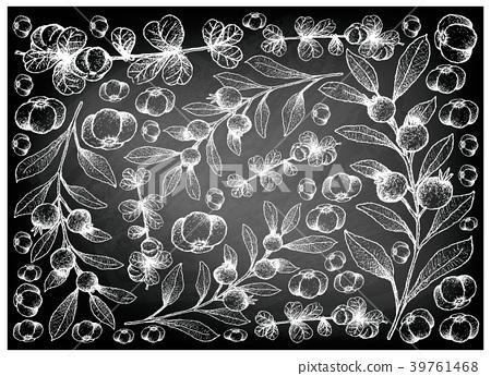 Canthium Berberidifolium Cambui Roxo on Chalkboard 39761468