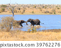 Elephant fighting from Kruger National Park 39762276