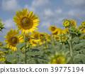 植物 植物學 植物的 39775194