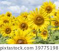 植物 植物學 植物的 39775198