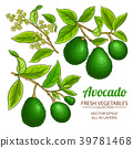 avocado vector branches 39781468