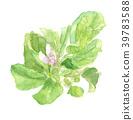 石榴花菜花 39783588