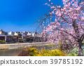 kamo river cherry 39785192