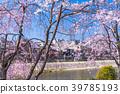 kamo river cherry 39785193