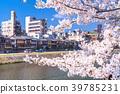kamo river yoshino 39785231