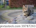 공원에서 노는 고양이 39787263