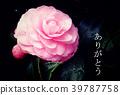 明信片大小 明信片 花朵 39787758