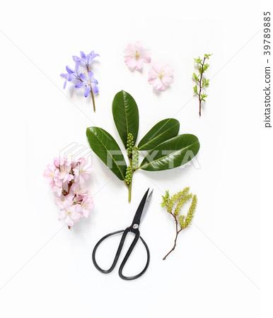Spring botanical floral composition. Pink Japanese 39789885