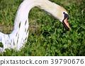 bird, birds, fowls 39790676