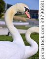 bird, birds, fowls 39790681
