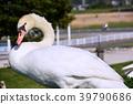 bird, birds, fowls 39790686