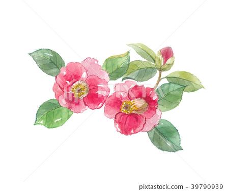 camellia 39790939