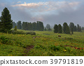 Coniferous forest in the fog on the slope of 39791819