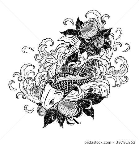Koi fish and chrysanthemum tattoo by hand drawing. 39791852