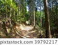 삼나무 숲, 삼나무, 산 39792217