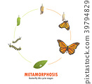 butterfly life cycle metamorphosis 39794829