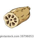 莲藕 蔬菜 矢量 39796053