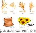 Ears of wheat, oat, rye, sunflower and barley.  39800618