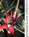 파인애플, 과일, 과실 39803541