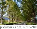 樹木 39805280