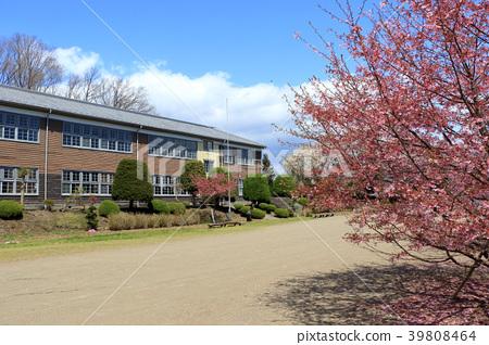 Spring Izo Studio 39808464
