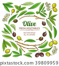 olive elements vector set 39809959