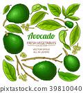avocado vector set 39810040