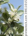 植物 植物学 植物的 39811015