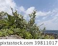 植物 植物学 植物的 39811017