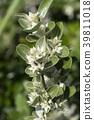 植物 植物学 植物的 39811018