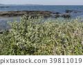 植物 植物学 植物的 39811019